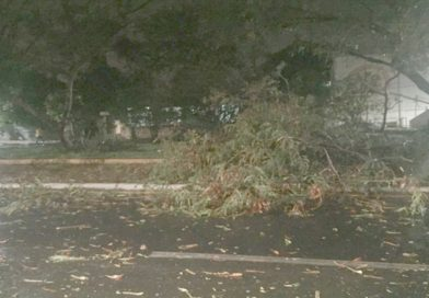 Forte chuva derruba árvores em Timon e faz chover granizo em Matões